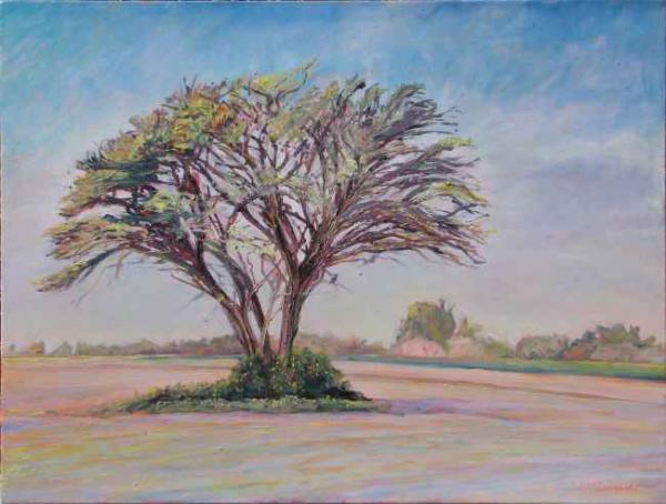 bluesky island acacia