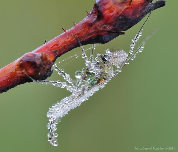 Macro Photography By Sergei Golubenko