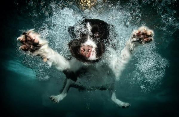 Underwater Pets : Underwater Dog Photography by Seth Casteel Art and Design