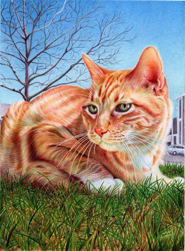 Margay Cat Drawing Ginger Cat Ballpoint Pen