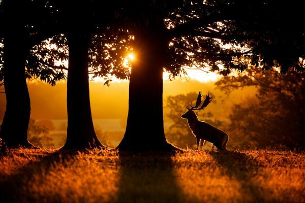 http://www.cuded.com/wp-content/uploads/2013/02/sunrise_by_-Mark-Bridger600_400.jpg