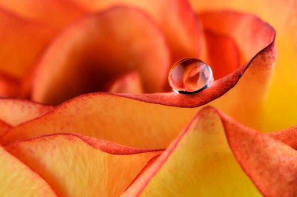 Macro Photography By Mark Johnson