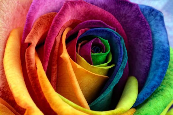 Fotos macro de flores