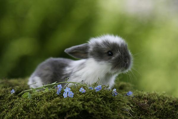 50 cute bunny pictures art and design