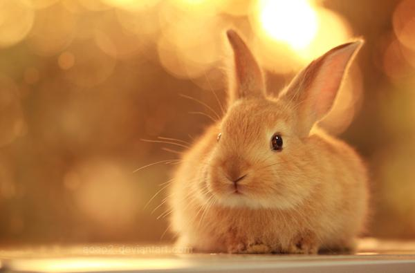 50 Cute Bunny Pictures | Art and Design