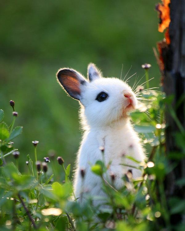 50 Cute Bunny Pictures...