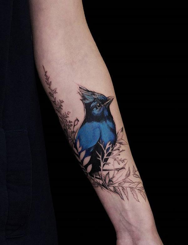 Stellar jay  bird tattoo