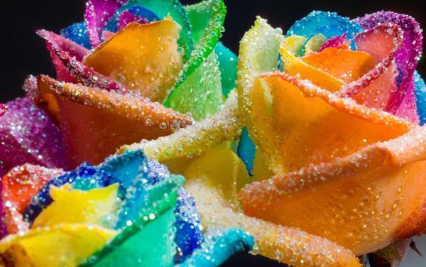 Glitter Rainbow Roses