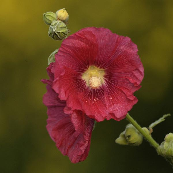 50 Pictures Of Pretty Flowers Art And Design