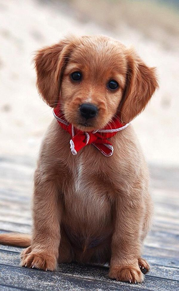 50 cute puppies i adore art and design cute puppies voltagebd Image collections