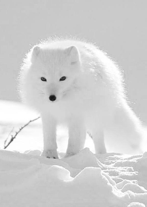 35个可爱的狐狸图片欣赏