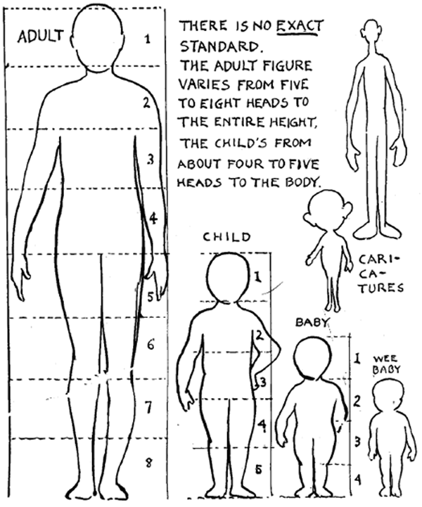 human female proportions