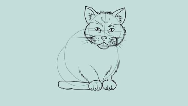 Step  How To Draw A Cat