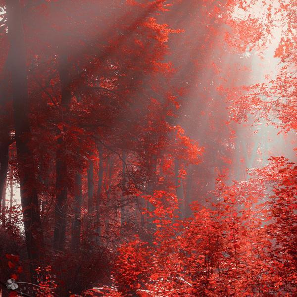 Ildiko Neer-Light Over Us - Forrest Photography by Ildiko Neer  <3 <3